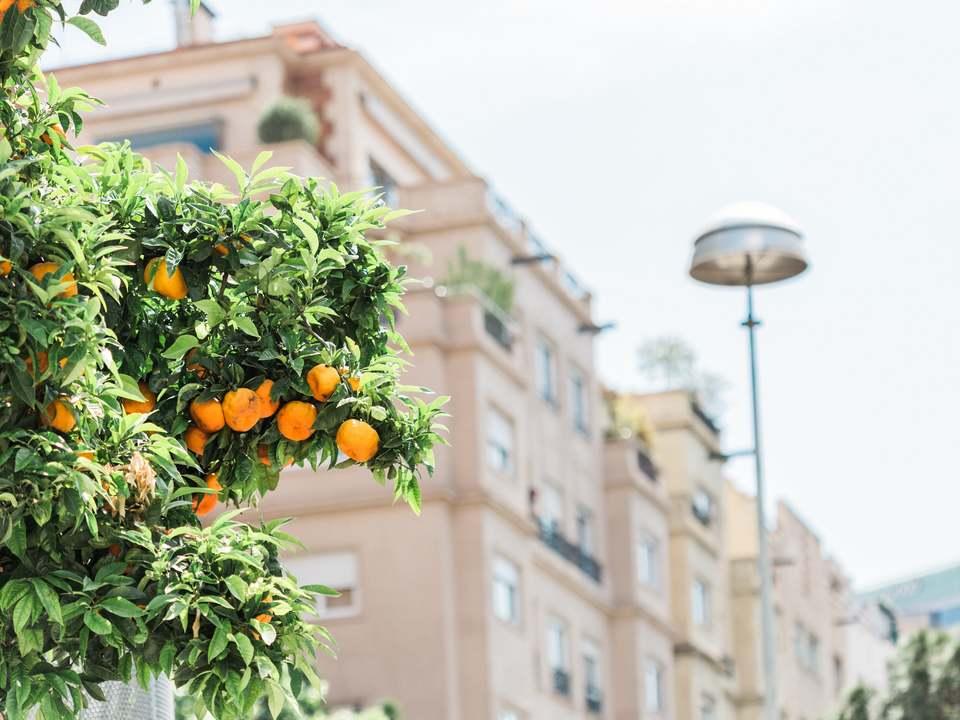 Immobilien zum Verkauf in Zona Alta, Barcelona - Lucas Fox