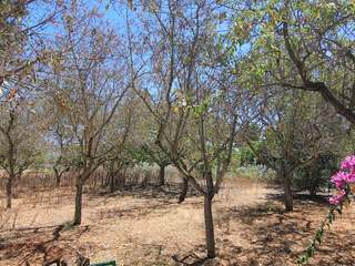 Plot with licence to build house with pool, Santa Eulalia