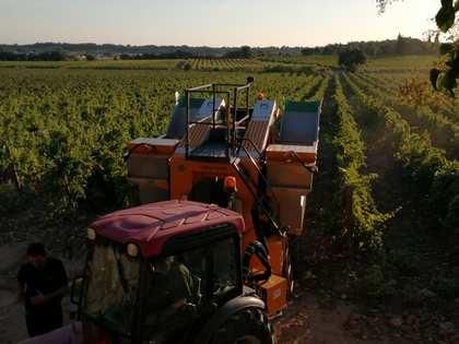 Vinyes de en venda a South France, França