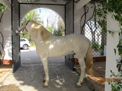 2,810m² Hästgård till salu i Sevilla, Andalusien