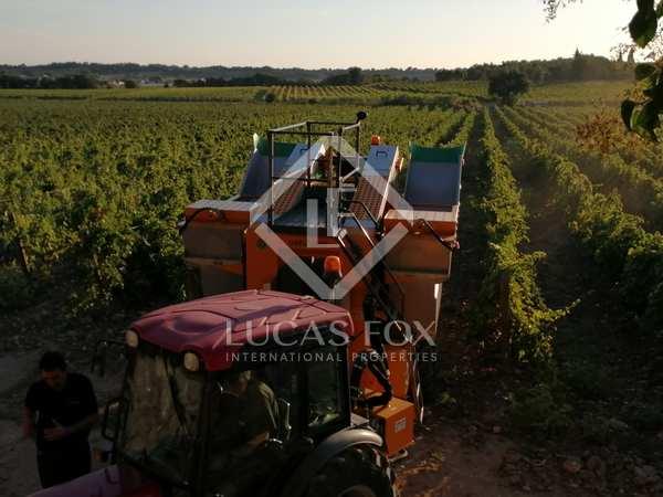 Vineyard for sale in South France, France